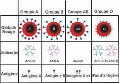 Voici 4 choses que vous devez impérativement savoir si vous êtes du groupe sanguin O